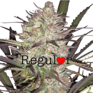 Durban Poison Regular Seeds