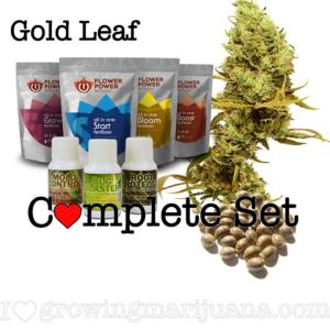 Gold Leaf Seeds Grow Set