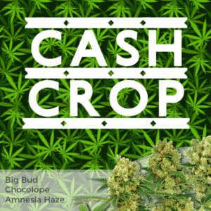 High Yield Mix Pack Seeds