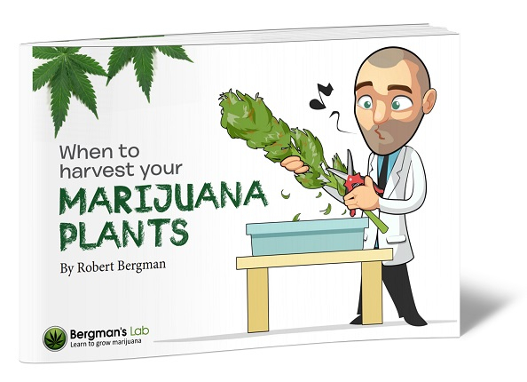 Marijuana Grow Bible
