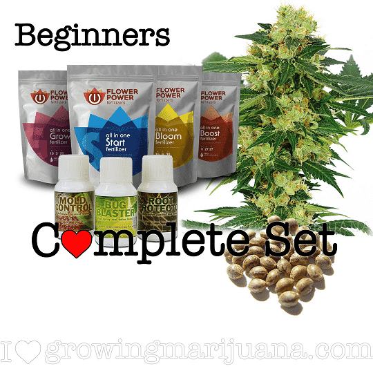 Marijuana Seeds For Beginners