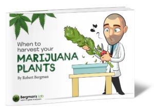 Cannabis Plant Guide