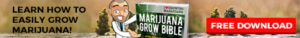 Grow Bible - Free Download