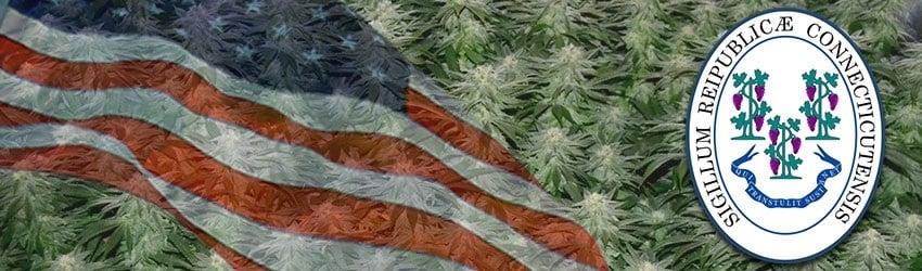Buy Marijuana Seeds In Connecticut