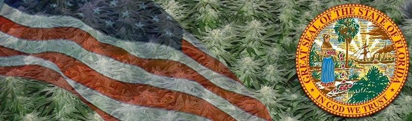 Buy Marijuana Seeds In Florida