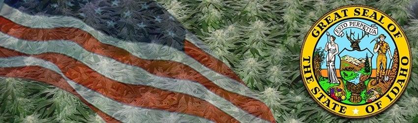 Buy Marijuana Seeds In Idaho