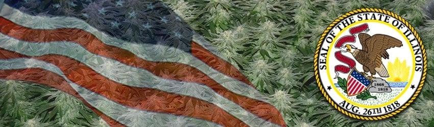 Buy Marijuana Seeds In Illinois