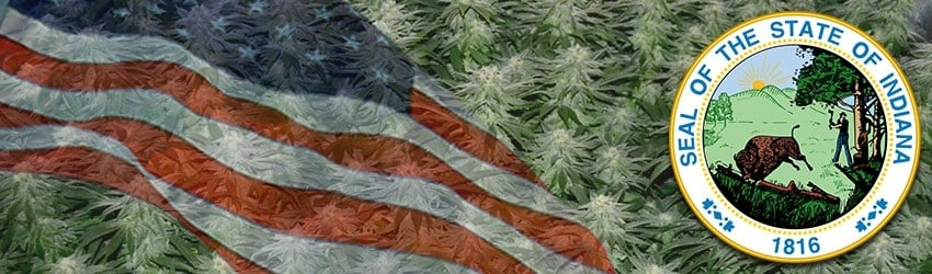 Buy Marijuana Seeds In Indiana