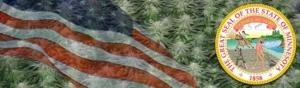 Buy Marijuana Seeds In Minnesota