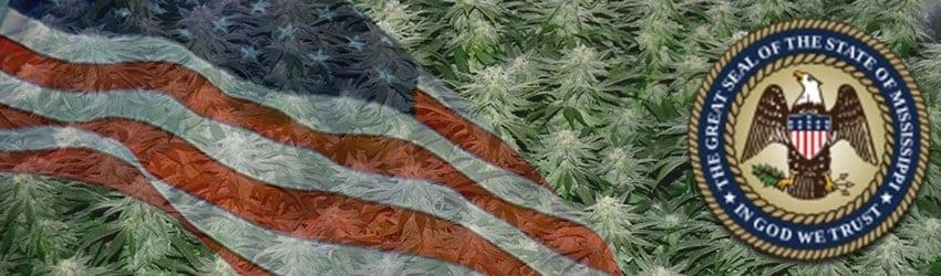 Buy Marijuana Seeds In Mississippi