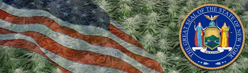Buy Marijuana Seeds In New York