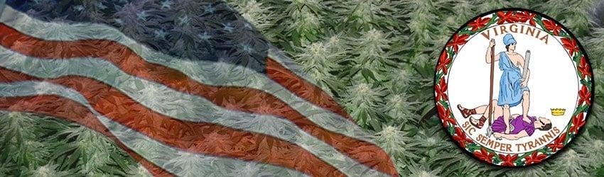Buy Marijuana Seeds In Virginia