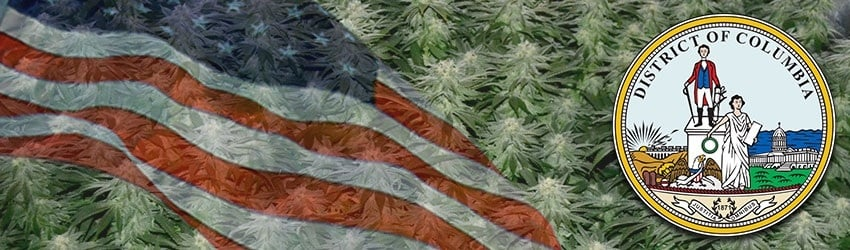 Buy Marijuana Seeds In Washington