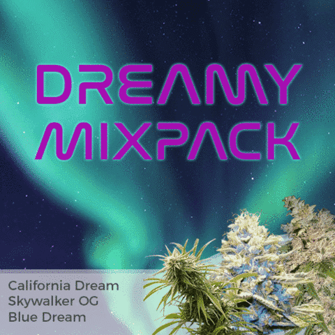 Dreamy Mix Pack