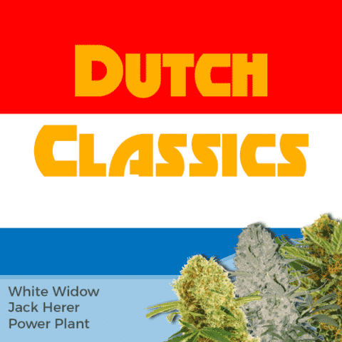 Dutch Classics Mix Pack Marijuana Seeds