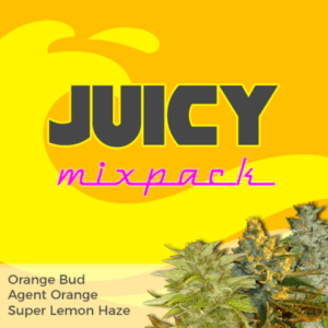 Juicy Mix Pack Marijuana Seeds