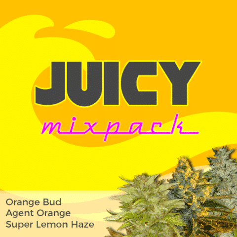 Juicy Mix Pack