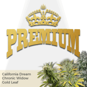 Premium Mix Pack Marijuana Seeds
