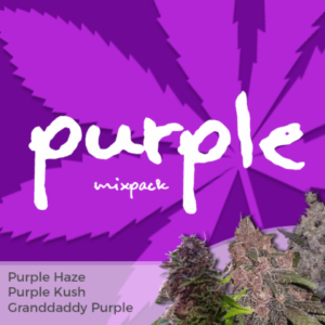 Purple Mix Pack Marijuana Seeds