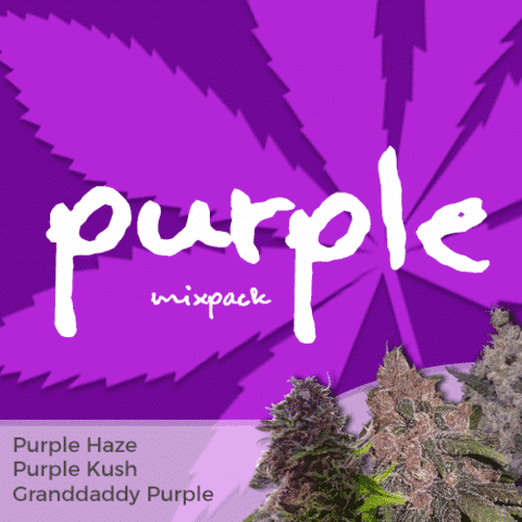 Purple Mix Pack