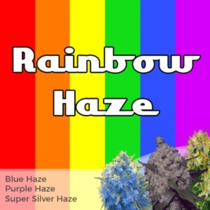 Rainbow Haze Mix Pack Marijuana Seeds