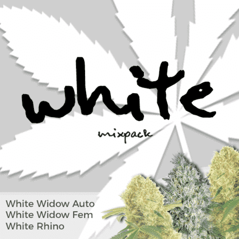 White Mix Pack Marijuana Seeds