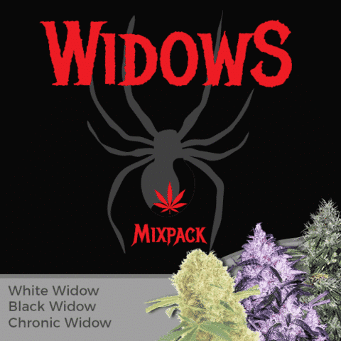 Widow Mix Pack Marijuana Seeds