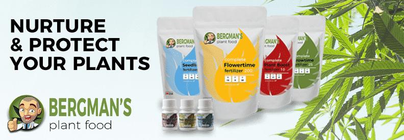Buy Bergmans Plant Food