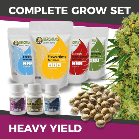 Grow Set For Heavy Yields