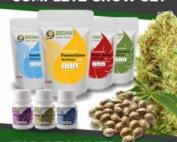 Complete Marijuana Seeds Grow Sets For Beginners