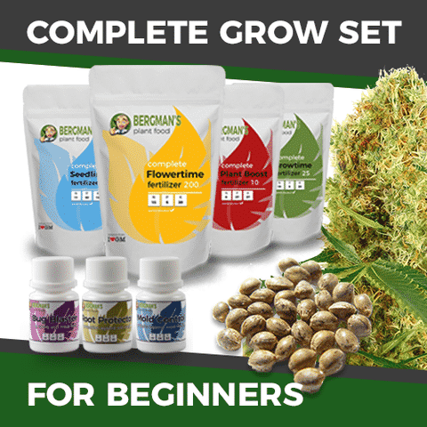 Complete Marijuana Seeds Grow Sets For Beginners