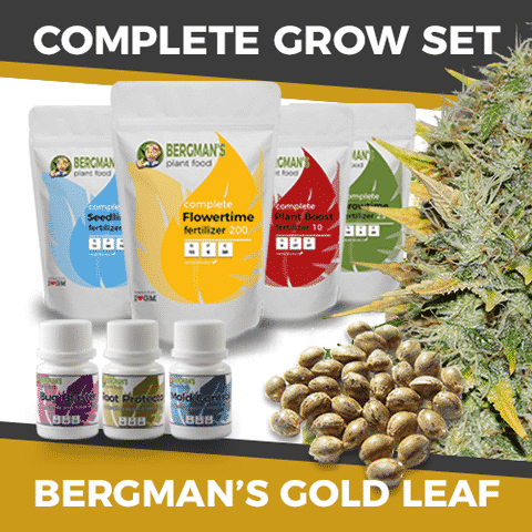 Complete Marijuana Seeds Grow Sets, Gold Leaf