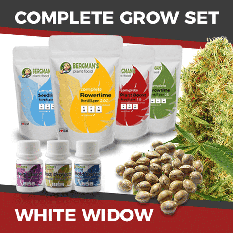 White Widow Seeds Grow Set