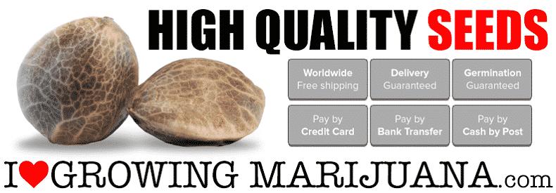 Buy Cannabis Seeds In California