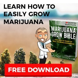 Grow Your Own Marijuana Seeds
