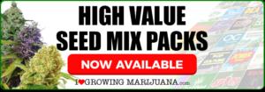 Buy Marijuana Seeds In USA Online