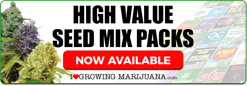 Buy Marijuana Seeds In USA Online