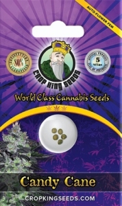 Candy Cane Feminized Seeds