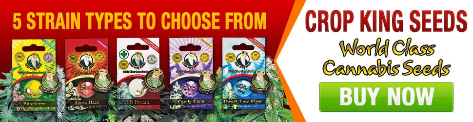 Buy Marijuana Seeds In Canada