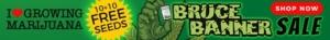 Bruce Banner Marijuana Seeds Offer