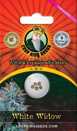 Buy White Widow Feminized Seeds