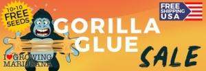 Gorilla Glue Marijuana Seeds Offer