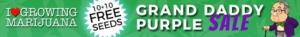 Grand Daddy Purple Marijuana Seeds Offer