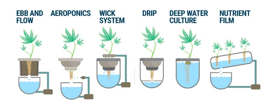 Hydroponics Systems For Growing Marijuana