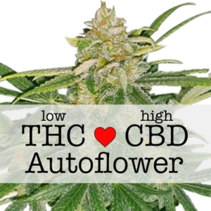 Critical Mass CBD Autoflower Seeds