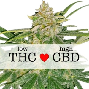 Critical Mass CBD Feminized Seeds