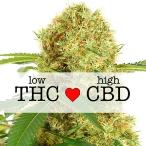 White Widow CBD Feminized Seeds