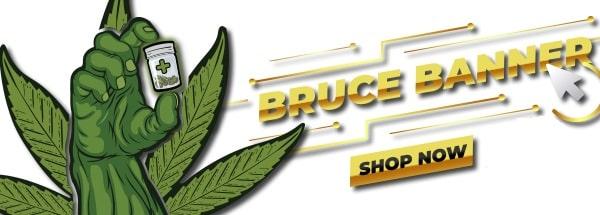 Bruce Banner Cannabis Seeds