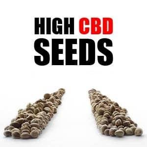 ILGM CBD Seeds