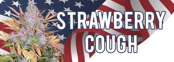 Strawberry Cough Seeds Shipped To USA